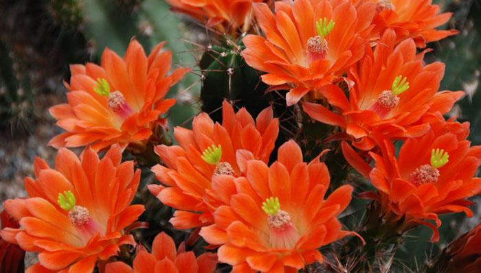cactussen foto van Machiel Karels